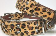 Dog & Cat Collars/Harnesses/Leads and Carriers all Made in USA-www.Around the Collar.com