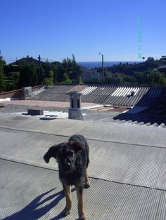 On the roof in Vallauris