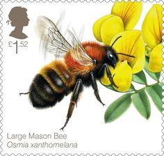 £1.52 stamp – the Large Mason Bee (Osmia xanthomelana) is Britain's rarest solitary bee found only at two sites in Wales.