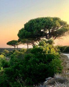 """Olivier Castaing στο Instagram: """"#Sunset ... moment de grâce quotidien #des lumières magiques qui embrasent chaque soir ces paysages sublimes de nature ... le bonheur d'un…"""" The Shining, Tree Of Life, Moment, Country Roads, Trees, Water, Outdoor, Instagram, Olive Tree"""