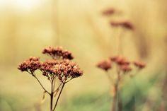 Winter, Flower, Dry, Decoration