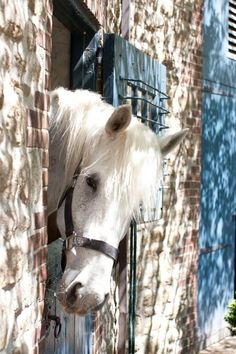 Welcome to my world of lovely things. Dreaming of heaven, dancing in a summer meadow with white horses. All The Pretty Horses, Beautiful Horses, Animals Beautiful, Hello Beautiful, Farm Animals, Cute Animals, All About Horses, Majestic Horse, Mundo Animal