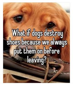 Dogs have been very popular pets for many years. It's clear that people and dogs are destined to share lives. However, humans like you have the responsibility of taking care of your dogs. Animals And Pets, Funny Animals, Cute Animals, Animals Planet, I Love Dogs, Puppy Love, Love For Dogs Quotes, Dog Quotes Sad, Sweet Dog Quotes