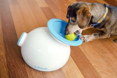 Tech Gadgets For Pets - House Beautiful