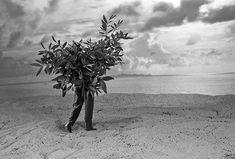 Gilbert Garcin « L'arbre qui voulait voir la mer »