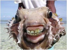 fish with human teeth | Something's Fishy - These Fish Have Human Teeth - Is This Nature or ...