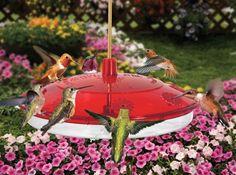 Droll Yankees Happy Eight 2 Hummingbird Feeder available at birdfeedersetc.com