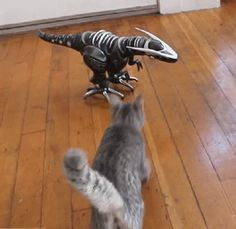 Dinosaur - Find and Share funny animated gifs Cute Funny Animals, Funny Animal Pictures, Funny Cats, Crazy Cat Lady, Crazy Cats, I Love Cats, Cool Cats, Best Cat Gifs, Tier Fotos