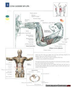 Training Anatomy - AB - Gym Ladder SitUps