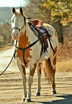 Paint Horse - photo by Holley Underhill