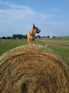"""Farm Dog"" - by Vicky Anderson"