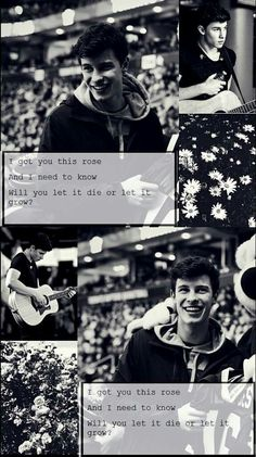 Roses - Shawn Mendes