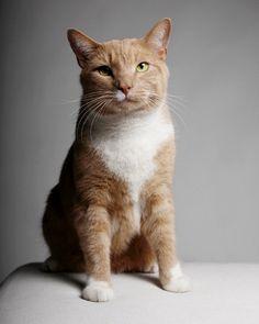 """Gli amanti di Colazione da Tiffany già lo adorano. Lui, il felino dalla  pelliccia rossa Vito Vincent, è attualmente in scena a Broadway nei  panni dell'amato """"gatto"""" di Holly Golightly, nato dalla penna di Truman  Capote. Già noto al pubblico cinematografico, ora Vito"""