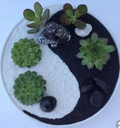 10 Mini Zen Garden Ideas, Awesome and also Beautiful Colorful Succulents, Growing Succulents, Small Succulents, Planting Succulents, Indoor Succulents, Succulent Cupcakes, Succulent Centerpieces, Succulent Arrangements, Succulent Display