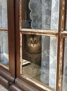 Gatos fisgando! Siempre..