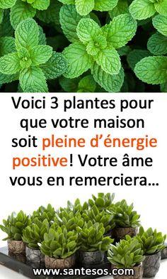 Voici 3 plantes pour que votre maison soit pleine d'énergie positive! Votre âme vous en remerciera… #plantes #jardinage #santénaturelle #astucessanté #énergie