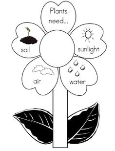 Printable plant with the 4 things it needs to grow. Nice to print off on index paper and use as a bulletin board display for Spring. Science Experiments Kids, Science Lessons, Science For Kids, Science Activities, Kindergarten Science, Preschool Learning, Preschool Crafts, Plant Lessons, Parts Of A Flower