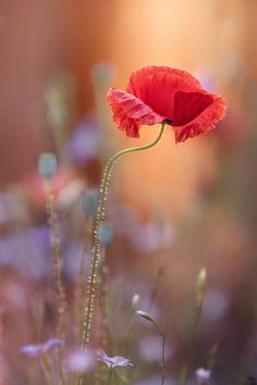 Photos : les plus belles fleurs du monde