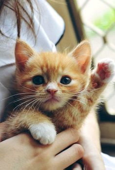 Cute Kitty - 20 Cute Animals Waving Hello to You | UnMotivating.com
