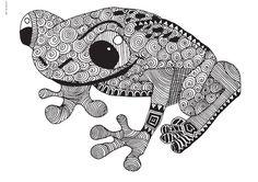 Amphibien - 19