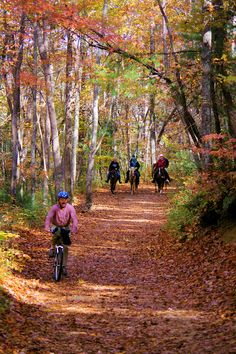 Hiking, biking and horseback riding trail in DuPont State Forest in North Carolina mountains. Top 50 Asheville hikes: http://www.romanticasheville.com/hiking.html