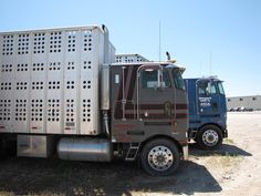old cattle trucks | Two old school cattle haulers in Sale's yard