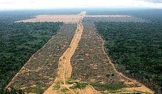 Folha certa : Desmatamento da Amazônia...