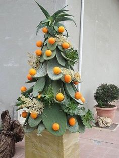 #Christmas #tree in #Sicily bebtrapanilveliero.it