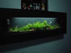 Waterless aquariums animated fish tank dream stuff for Wall mounted fish tanks