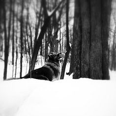 Snow day adventures at Burgoyne Woods Dog Park - St. Catharines, ON - Angus Off-Leash #dogs #puppies #cutedogs #stcatharines #ontario #dogparks #angusoffleash
