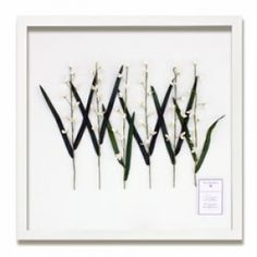 The Shellatier Collection - Framed Coquina Shell Delphiniums White / Large