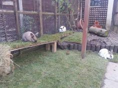 Image result for ultimate outdoor bunny pen