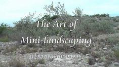The Art of Cactus Mini-landscaping