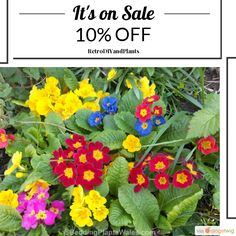 10% OFF on select products. Hurry, sale ending soon!  Check out our discounted products now: https://orangetwig.com/shops/AAB5v98/campaigns/AACeg99?cb=2016004&sn=RetroDIYandPlants&ch=pin&crid=AACeg3n&utm_source=Pinterest&utm_medium=Orangetwig_Marketing&utm_campaign=SPRING_GARDEN_PLANTS