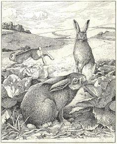 by Walter Heubach   http://store.tidbitstrinkets.com/blog/wp-content/uploads/2010/03/Walter_Heubach-1865-1923-leporidae_rabbits.jpg
