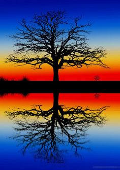Rainbow Tree Silhouette