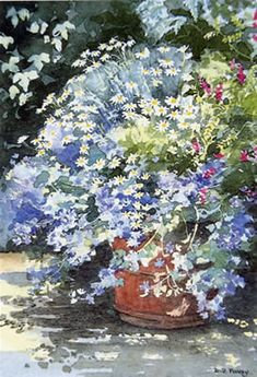 Pot – Blue mallow - watercolour by Dorothy Pavey