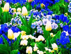 Spring Flowers Flower Print Digital Download by OxfordDownloads
