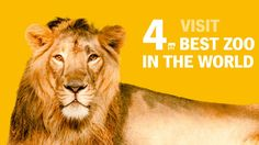 Fourth best zoo in the world Prague Zoo, World, Animals, Travel Ideas, Europe, English, Tips, Animales, Animaux