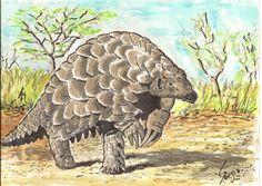 Le Pangolin (mammifère insectivore édenté dont le corps allongé est en grande partie recouvert d'écailles ce qui leur vaut aussi d'être appelés fourmiliers écailleux). Wikipedia