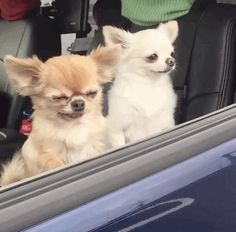 In the video they're waiting in the car together, being cute. But then Maguro just starts sinking.