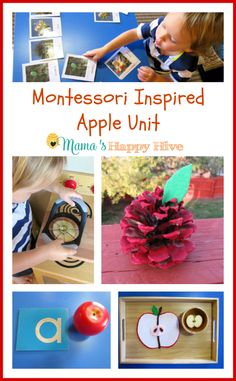 A wonderful collection of Montessori inspired apple unit activities. This unit includes apple art, examining apple parts, apple life-cycle, and more. Montessori Preschool, Fall Preschool, Preschool At Home, Preschool Themes, Preschool Apples, Montessori Trays, Kindergarten Apples, Apple Activities, Autumn Activities