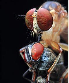 Shikhei Goh Macro Bugs