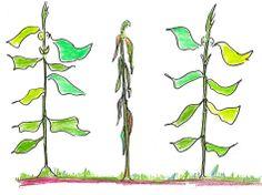 Plant Communication