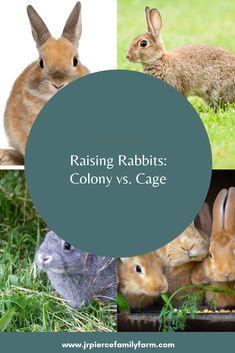 Raising Rabbits: Colonies vs Hutches - J&R Pierce Family Farm Raising Rabbits, Farm Projects, Rabbit Hutches, Urban Homesteading, Homestead Survival, Livestock, Colonial, Buns, Charlotte