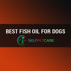 Our Experts Pick Up Top 10 Best Fish Oil for Dogs in Learn why the best fish oil for dogs is good for your pet and which one works best for them. Best Fish Oil, Oils For Dogs, Best Dogs, Your Pet, Board, Sign