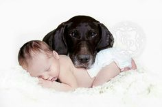 Baby Boy with family dog so cute one of my best newborn photos   © Sara Callow Photography #newbornphotography #newborn #photography #photographer #saracallow #saracallowphotography #babyboy #cute #siblings #babe #sweet #newbornphotography #beautiful #germanpointer #love #dog #baby #loveit #myfavouritephoto #ohmygod #iloveit #ilovemyjob #proud #best_pictures_of_newborns #cutekidsclub #SCP #newbornphotography