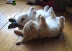 rabbits, cute, bunny