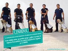 El Centro Nacional de Adiestramiento y Desarrollo de la Unidad Canina (CENADUC) forma unidades caninas, que permitan apoyar y agilizar el proceso de inspección fitozoosanitaria de productos agropecuarios regulados por la SAGARPA. SAGARPA SAGARPA MX #SomosProductores