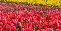 Garden of Flower....